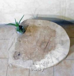 Table low wood, coffee table, Oak oak table bark, round table, round table